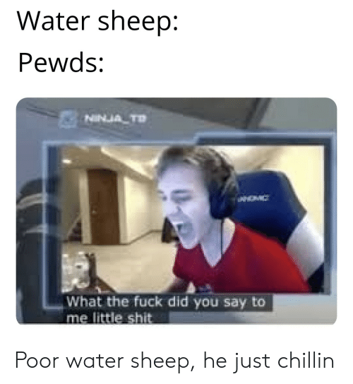 Water Sheep Pewds NINJA D What the Fuck Did You Say to Me Little