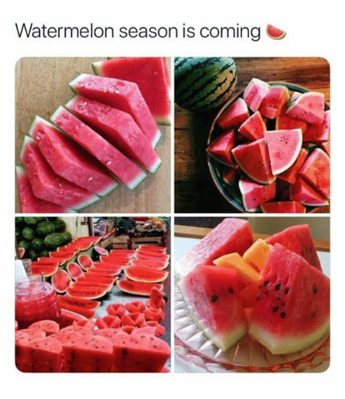 Memes, 🤖, and Watermelon: Watermelon season is cominge