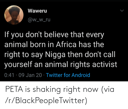 Twitter For Android: Waweru  @w_w_ru  If you don't believe that every  animal born in Africa has the  right to say Nigga then don't call  yourself an animal rights activist  0:41 · 09 Jan 20 · Twitter for Android PETA is shaking right now (via /r/BlackPeopleTwitter)