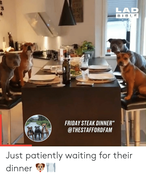 """Dank, Friday, and Bible: WAY  FLRE  LAD  BIBLE  FRIDAY STEAK DINNER""""  @THESTAFFORDFAM Just patiently waiting for their dinner 🐶🍽"""