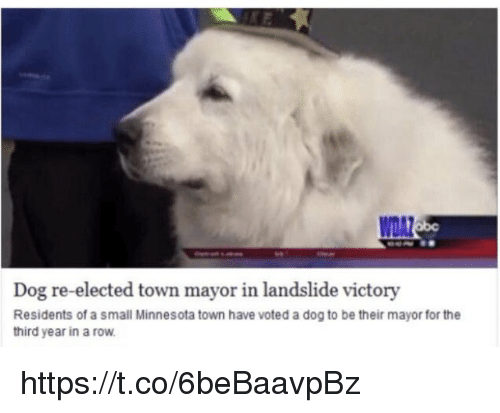 Memes, Minnesota, and 🤖: WDAZ  Dog re-elected town mayor in landslide victory  Residents of a small Minnesota town have voted a dog to be their mayor for the  third year in a row https://t.co/6beBaavpBz