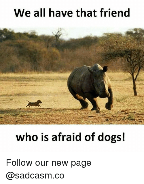 Dogs, Memes, and 🤖: We all have that friend  who is afraid of dogs! Follow our new page @sadcasm.co