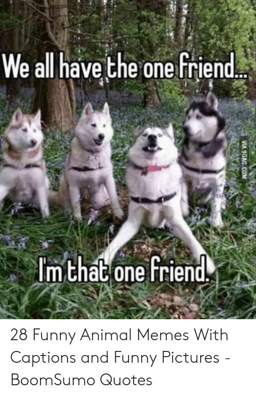 funny animal memes: We all have the one friend  m chat one Friend. 28 Funny Animal Memes With Captions and Funny Pictures - BoomSumo Quotes