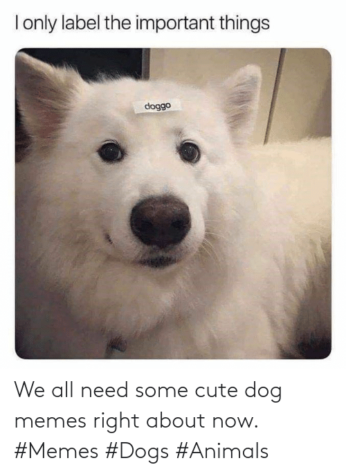 Dog Memes: We all need some cute dog memes right about now. #Memes #Dogs #Animals