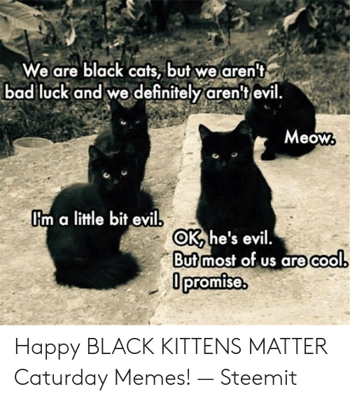 Caturday Meme: We are black cats, but we aren't  bad luck and we definitely arent evil  Meow  I'm a litle bit evil  OK, he's evil.  Butmost of us are cool  promise Happy BLACK KITTENS MATTER Caturday Memes! — Steemit