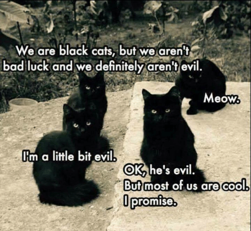 Bad, Cats, and Definitely: We are black cats, but we aren't  bad luck and we definitely aren't evil  Meow  Im a little bit evil  OK he's evil.  But most of us are cool  Opromise