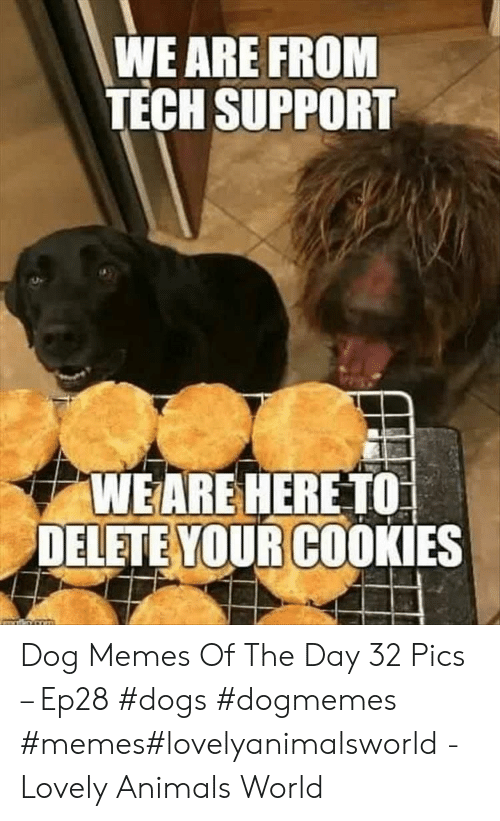 Animals, Cookies, and Dogs: WE ARE FROM  TECH SUPPORT  WEARE HERE TO  DELETE YOUR COOKIES Dog Memes Of The Day 32 Pics – Ep28 #dogs #dogmemes #memes#lovelyanimalsworld - Lovely Animals World