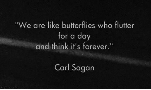 "Fluttering: ""We are like butterflies who flutter  for a day  and think it's forever.""  Carl Sagan"