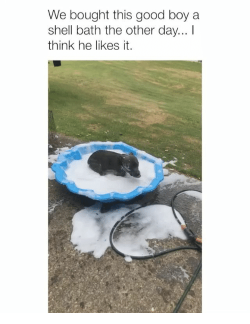He Likes It: We bought this good boy a  shell bath the other day... I  think he likes it.