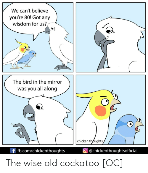 fb.com: We can't believe  you're 80! Got any  wisdom for us?  The bird in the mirror  was you all along  chicken thoughts  f fb.com/chickenthoughts  @chickenthoughtsofficial The wise old cockatoo [OC]