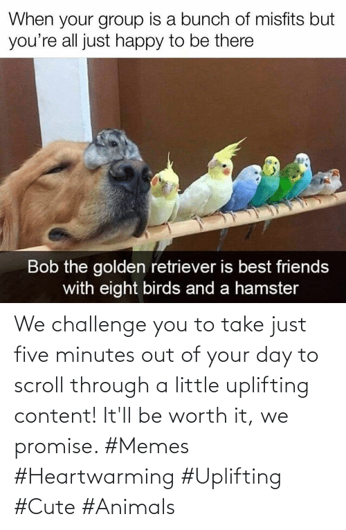 five: We challenge you to take just five minutes out of your day to scroll through a little uplifting content! It'll be worth it, we promise. #Memes #Heartwarming #Uplifting #Cute #Animals