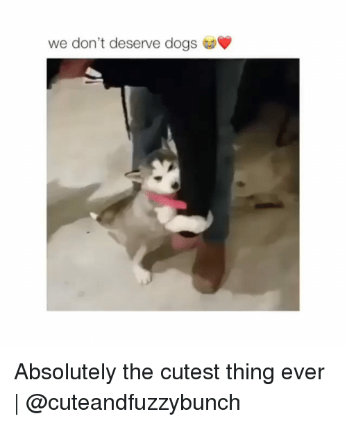 Dogs, Memes, and 🤖: we don't deserve dogs Absolutely the cutest thing ever | @cuteandfuzzybunch
