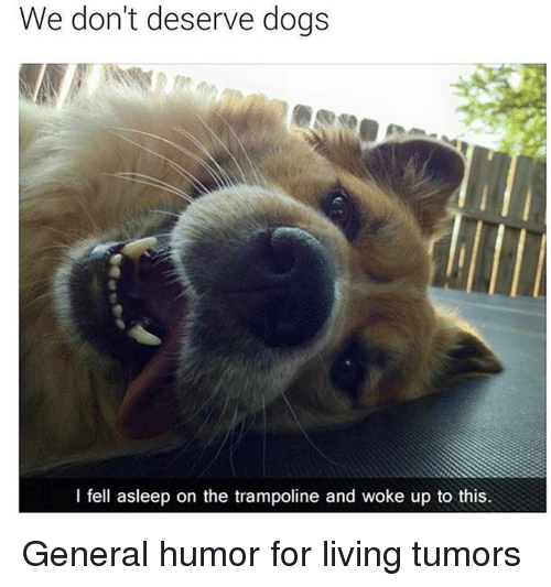 Dank, Dogs, and Trampoline: We don't deserve dogs  I fell asleep on the trampoline and woke up to this General humor for living tumors