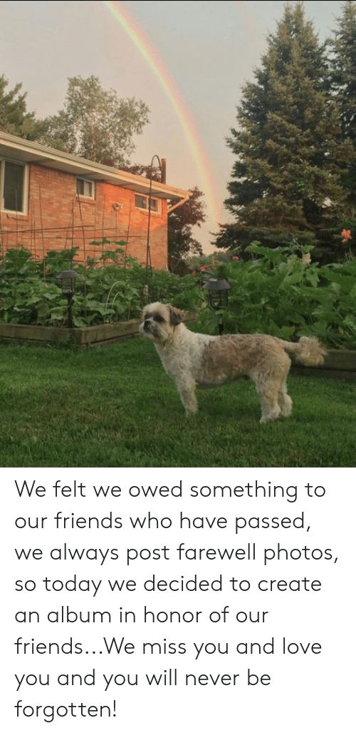 Aww Memes: We felt we owed something to our friends who have passed, we always post farewell photos, so today we decided to create an album in honor of our friends...We miss you and love you and you will never be forgotten!