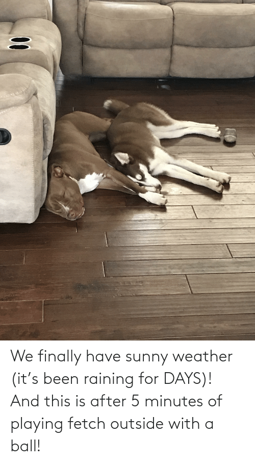 Aww Memes: We finally have sunny weather (it's been raining for DAYS)! And this is after 5 minutes of playing fetch outside with a ball!