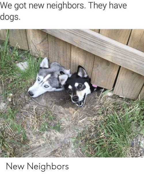 Dogs, Neighbors, and Got: We got new neighbors. They have  dogs New Neighbors