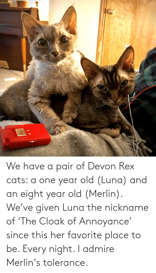 devon: We have a pair of Devon Rex cats: a one year old (Luna) and an eight year old (Merlin). We've given Luna the nickname of 'The Cloak of Annoyance' since this her favorite place to be. Every night. I admire Merlin's tolerance.