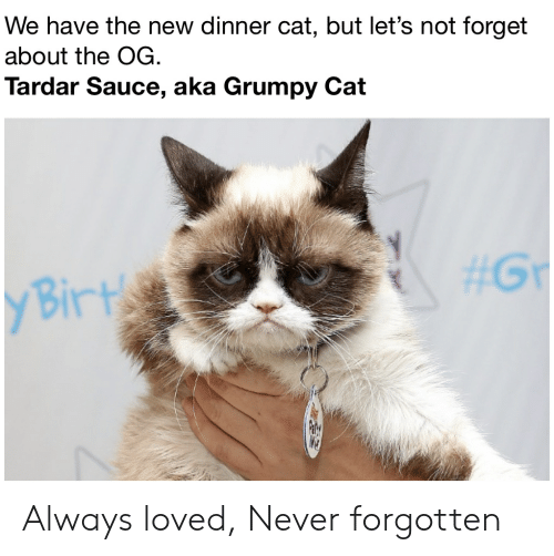 Tardar Sauce: We have the new dinner cat,, but let's not forget  about the OG.  Tardar Sauce, aka Grumpy Cat  #Gr  y Birt Always loved, Never forgotten