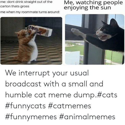 cat meme: We interrupt your usual broadcast with a small and humble cat meme dump.#cats #funnycats #catmemes #funnymemes #animalmemes