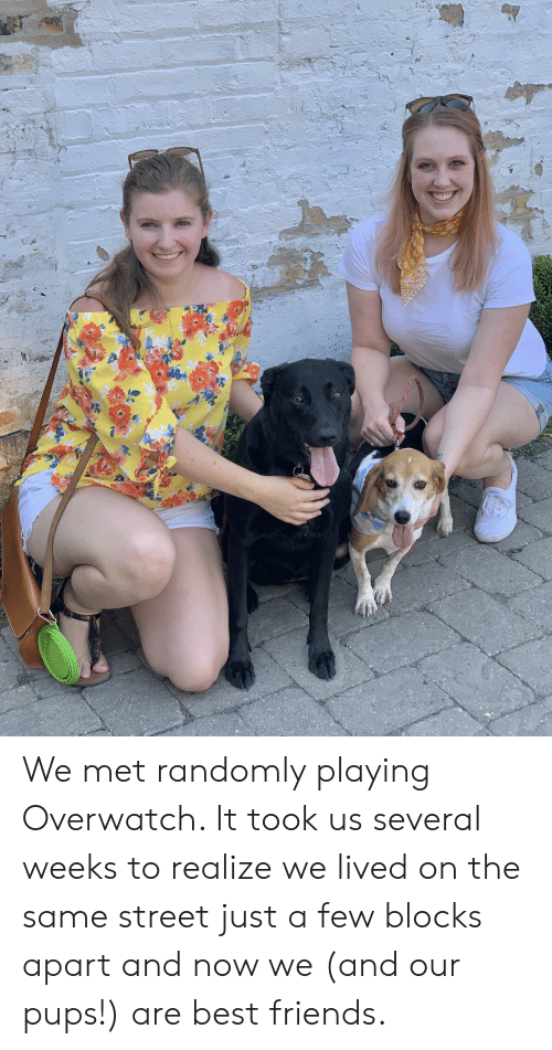 Friends, Best, and Best Friends: We met randomly playing Overwatch. It took us several weeks to realize we lived on the same street just a few blocks apart and now we (and our pups!) are best friends.