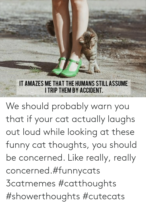 thoughts: We should probably warn you that if your cat actually laughs out loud while looking at these funny cat thoughts, you should be concerned. Like really, really concerned.#funnycats 3catmemes #catthoughts #showerthoughts #cutecats