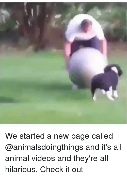 Animal Videos: We started a new page called @animalsdoingthings and it's all animal videos and they're all hilarious. Check it out
