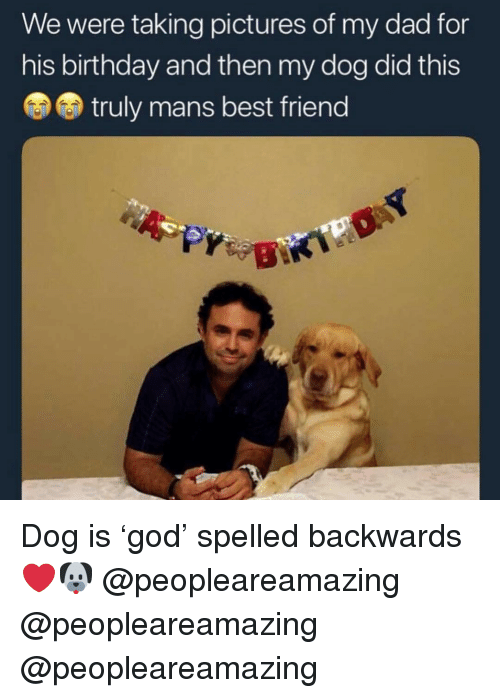 Best Friend, Birthday, and Dad: We were taking pictures of my dad for  his birthday and then my dog did this  truly mans best friend Dog is 'god' spelled backwards ❤️🐶 @peopleareamazing @peopleareamazing @peopleareamazing
