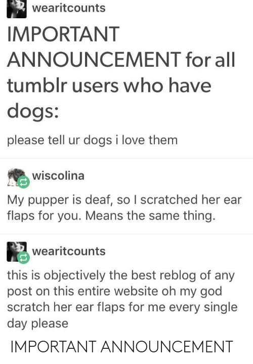 Dogs, God, and Love: wearitcounts  IMPORTANT  ANNOUNCEMENT for all  tumblr users who have  dogs:  please tell ur dogs i love them  wiscolina  My pupper is deaf, so I scratched her ear  flaps for you. Means the same thing.  wearitcounts  this is objectively the best reblog of any  post on this entire website oh my god  scratch her ear flaps for me every single  day please IMPORTANT ANNOUNCEMENT