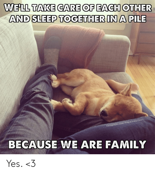 Facebook, Family, and Memes: WEHLL TAKE CARE OF EACH OTHER  AND SLEEP TOGETHER IN A PILE  FACEBOOK.COM/THE K9.1INSTINCT  BECAUSE WE ARE FAMILY Yes. <3