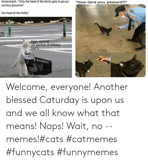 funnymemes: Welcome, everyone! Another blessed Caturday is upon us and we all know what that means! Naps! Wait, no -- memes!#cats #catmemes #funnycats #funnymemes