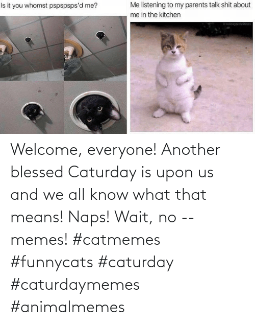 welcome: Welcome, everyone! Another blessed Caturday is upon us and we all know what that means! Naps! Wait, no -- memes! #catmemes #funnycats #caturday #caturdaymemes #animalmemes