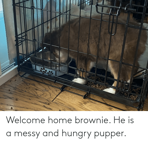 Brownie: Welcome home brownie. He is a messy and hungry pupper.