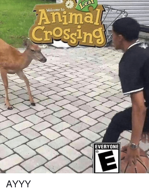 Animal, Dank Memes, and  Welcome: Welcome to  Animal  Crossin  EVERYONIE AYYY