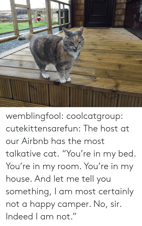 """Tumblr, Airbnb, and Blog: wemblingfool:  coolcatgroup:  cutekittensarefun:  The host at our Airbnb has the most talkative cat.    """"You're in my bed. You're in my room. You're in my house. And let me tell you something, I am most certainly not a happy camper. No, sir. Indeed I am not."""""""