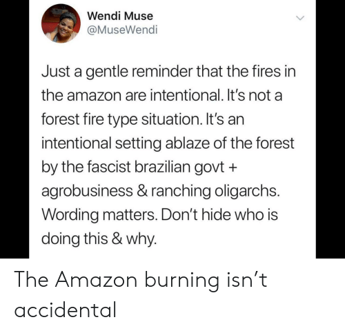 fascist: Wendi Muse  @MuseWendi  Just a gentle reminder that the fires in  the amazon are intentional. It's not a  forest fire type situation. It's an  intentional setting ablaze of the forest  by the fascist brazilian govt +  agrobusiness & ranching oligarchs.  Wording matters. Don't hide who is  doing this & why. The Amazon burning isn't accidental