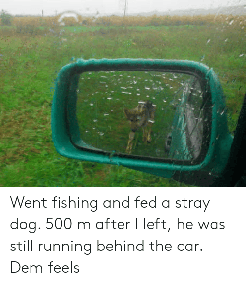 Dem Feels: Went fishing and fed a stray dog. 500 m after I left, he was still running behind the car. Dem feels