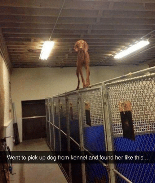 Her, Dog, and This: Went to pick up dog from kennel and found her like this...