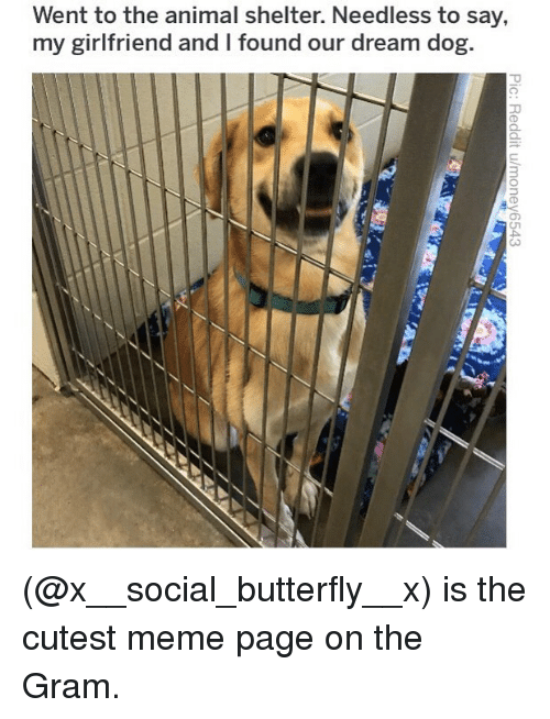 Meme, Memes, and Animal: Went to the animal shelter. Needless to say,  my girlfriend and I found our dream dog.  3 (@x__social_butterfly__x) is the cutest meme page on the Gram.