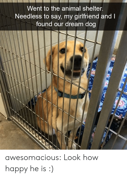 Tumblr, Animal, and Animal Shelter: Went to the animal shelter  Needless to say, my girlfriend and  found our dream dog awesomacious:  Look how happy he is :)
