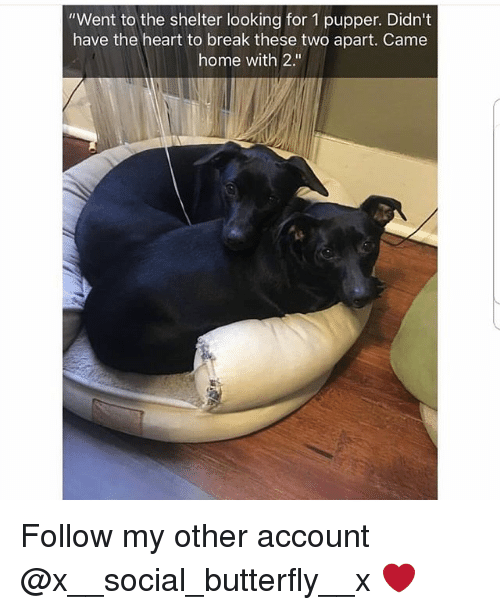 """Memes, Break, and Butterfly: """"Went to the shelter looking for 1 pupper. Didn't  have the heart to break these two apart. Came  home with 2."""" Follow my other account @x__social_butterfly__x ❤"""