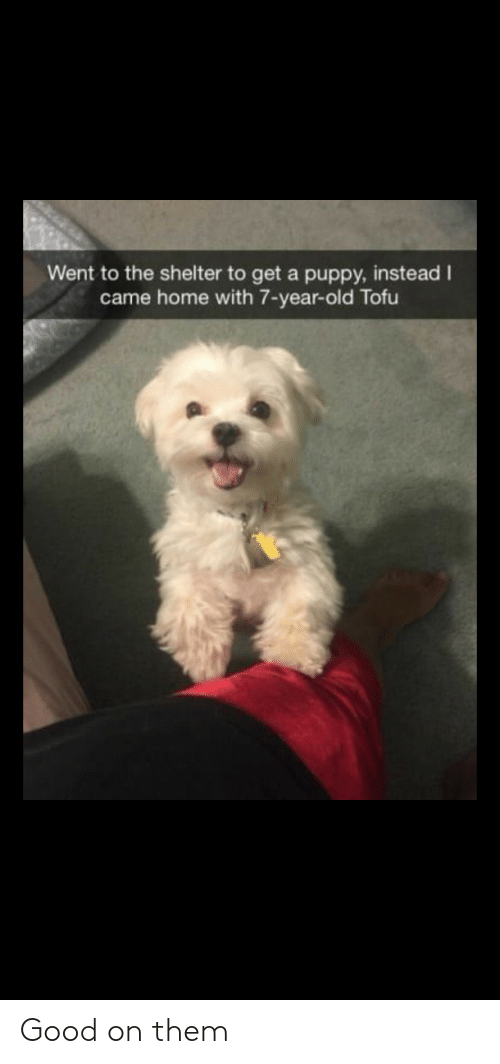 Good, Home, and Puppy: Went to the shelter to get a puppy, instead I  came home with 7-year-old Tofu Good on them