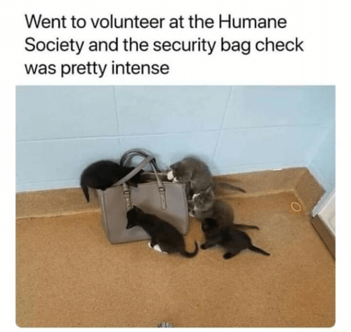 volunteer: Went to volunteer at the Humane  Society and the security bag check  was pretty intense