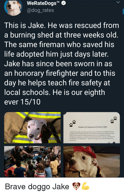 "Sworn: WeRateDogs""  @dog_rates  TM  This is Jake. He was rescued from  a burning shed at three weeks old  The same fireman who saved his  life adopted him just days later  Jake has since been sworn in as  an honorary firefighter and to this  day he helps teach fire safety at  ocal schools. He is our eighth  ever 15/10  Manahan Fire Department X9 Oath of office  1, Jake the Fire Dog, as the Mascot for the City of Hanahan Fire Department, do  hereby promise to help make kids smile with my charming personality and help  them to learn about fire safety and what to do in an emergency situation  Through my endeavors, I will help to promote the Mission, Vision, and Values of  the Hanahan Fire Department.. No job is too big or too small where kids are  concerned Brave doggo Jake 🐶💪"