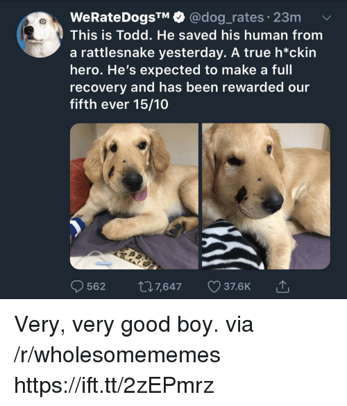 True, Good, and Been: WeRateDogsTM @dog_rates 23m  This is Todd. He saved his human from  a rattlesnake yesterday. A true h*ckin  hero. He's expected to make a full  recovery and has been rewarded our  fifth ever 15/10  562 07,647 37.6K Very, very good boy. via /r/wholesomememes https://ift.tt/2zEPmrz