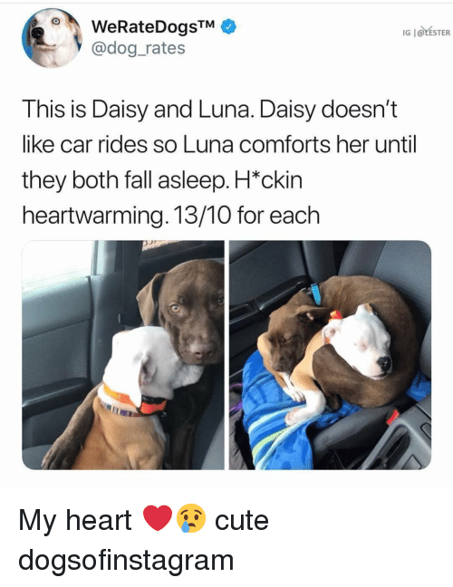 Cute, Fall, and Memes: WeRateDogsTM  @dog rates  IG | @LESTER  This is Daisy and Luna. Daisy doesn't  like car rides so Luna comforts her until  they both fall asleep. H*ckin  heartwarming. 13/10 for each My heart ❤️😢 cute dogsofinstagram