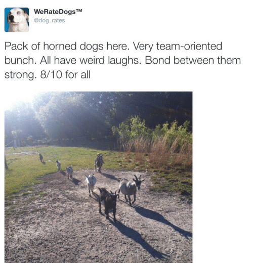 Dogs, Weird, and Strong: WeRateDogsTM  @dog_rates  Pack of horned dogs here. Very team-oriented  bunch. All have weird laughs. Bond between them  strong. 8/10 for all
