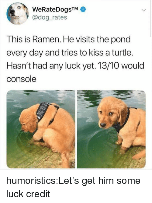Ramen, Reddit, and Target: WeRateDogsTM  @dog rates  This is Ramen. He visits the pond  every day and tries to kiss a turtle.  Hasn't had any luck yet. 13/10 would  console humoristics:Let's get him some luck credit
