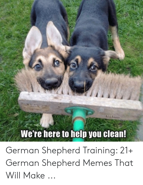 Memes, German Shepherd, and Help: We're here to help you clean! German Shepherd Training: 21+ German Shepherd Memes That Will Make ...