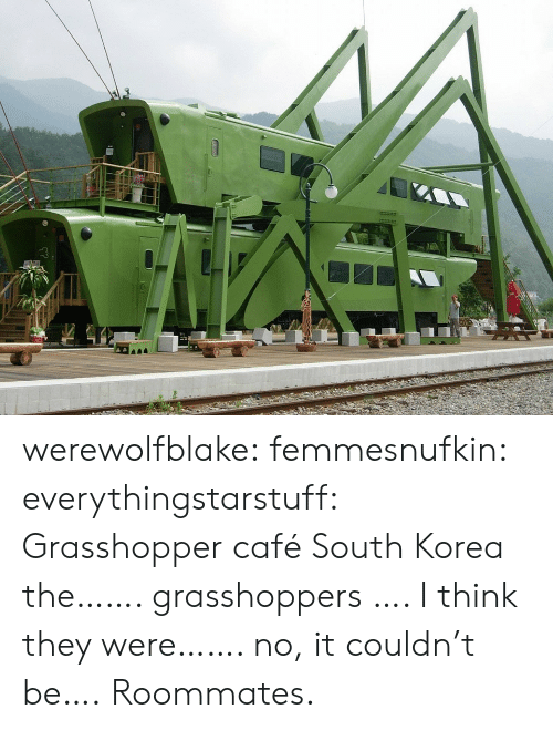 roommates: werewolfblake: femmesnufkin:  everythingstarstuff:   Grasshopper café South Korea the……. grasshoppers …. I think they were……. no, it couldn't be….   Roommates.