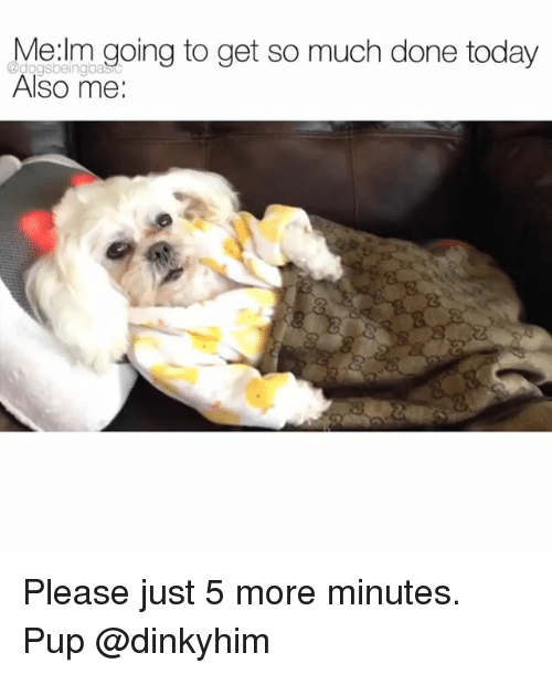 Memes, Today, and Pup: Werm ooing to get so much done today  Also me:  @dogsbeingba Please just 5 more minutes. Pup @dinkyhim